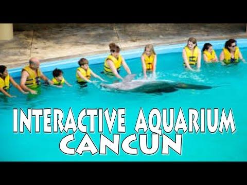 CANCUN INTERACTIVE AQUARIUM- Aquario Interactivo Mexico 4K