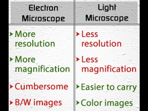 how is a light microscope similar to an electron microscope