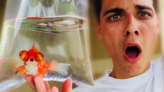 OMG!! WHAT'S WRONG WITH THIS GOLDFISH