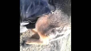 Пацана выебала собака реальный прикол)))