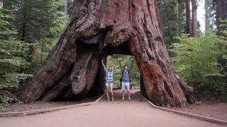USA #26 Oglądamy gigantyczne sekwoje w Calaveras Big Trees State Park