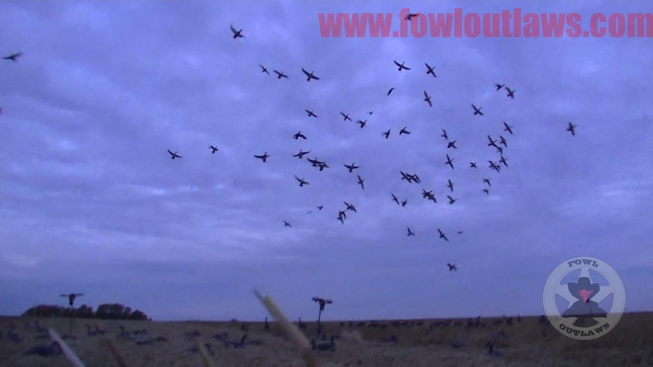 Download Epic Duck Hunt - Saskatchewan Field Style