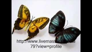 Валяние из шерсти бабочки