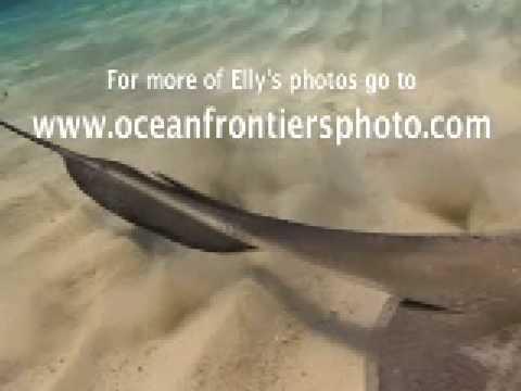 Ellary, Cayman Islands (136017)