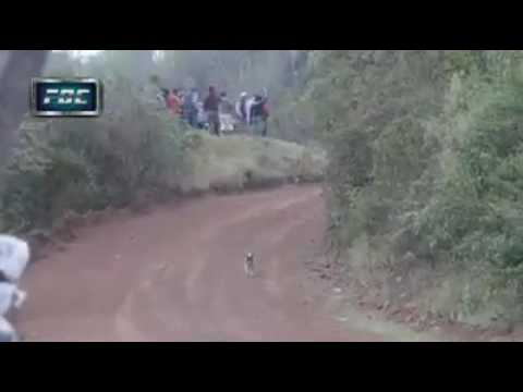 Auto salta un perro en Rally codasur bolivia