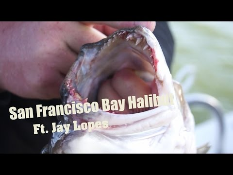 Halibut Fishing the San Francisco Bay Ft. Jay Lopes!