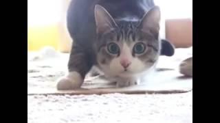 Прикол кошкам