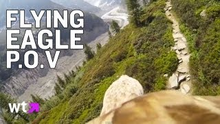 Eagle Flying with GoPro Cam | What's Trending Now