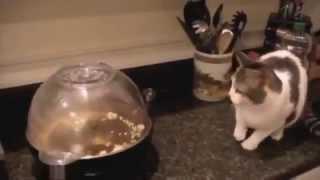 Смешное и прикольное видео, смотреть всем  Кошки  Funny animals