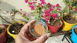 बचाये पौधो को चींटियो और फंगस से,घर में ही मिलेगी ये काम की चीज,Best organic fungicide