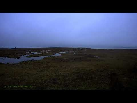Estonia Crane cam 2017 11 01 Geese flying in the distance