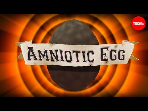 Video image: The game-changing amniotic egg - April Tucker