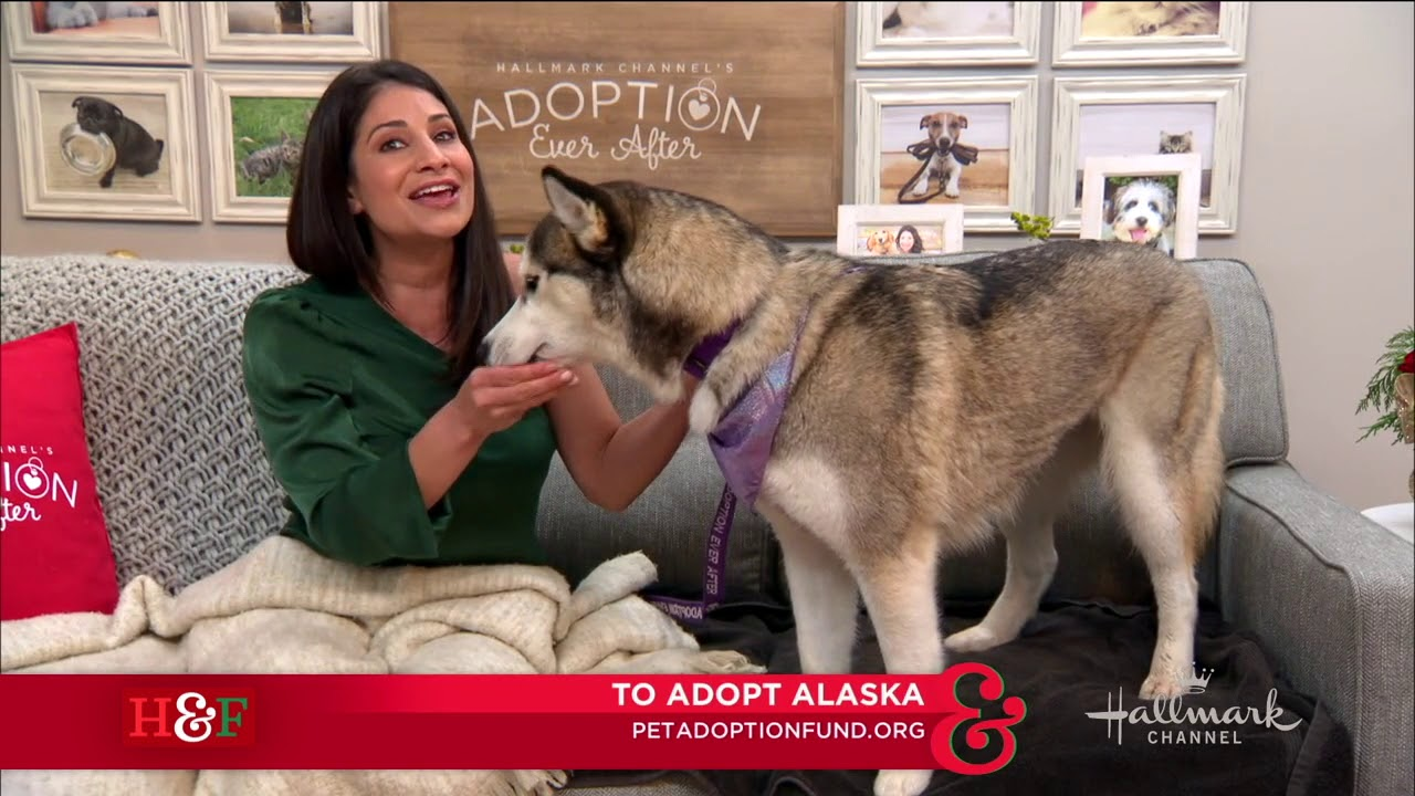 Larissa Wohl's Pet Adoption: Alaska