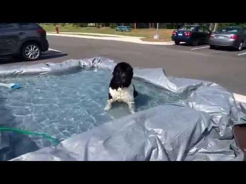 Dethan christens a poor man's pool