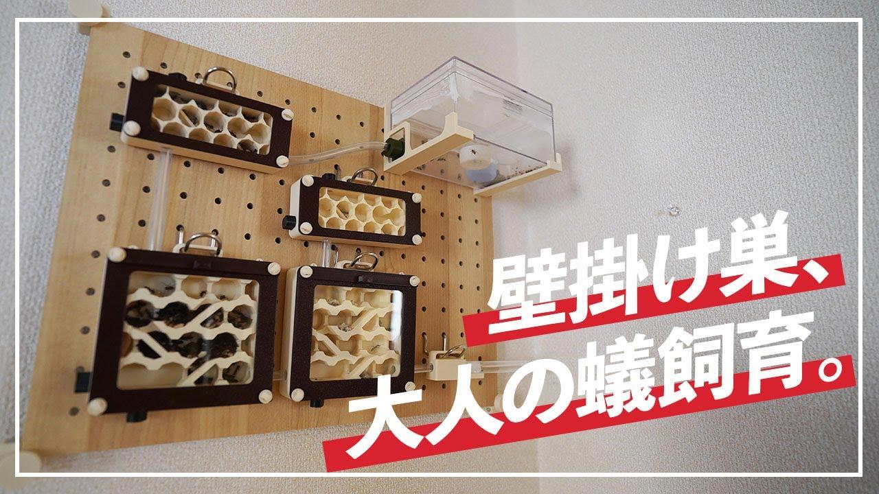 hybrid nest type wallタイプのレビューをして頂きました、 あんつべChannel ( ´ ∀ ` )ノ