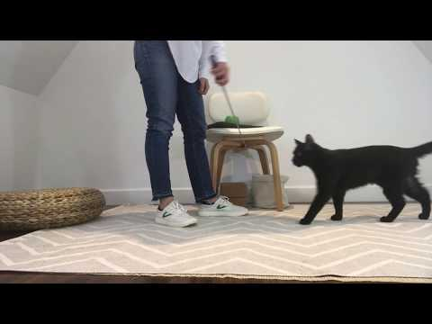 Cat Tricks: Teach your cat to Spin