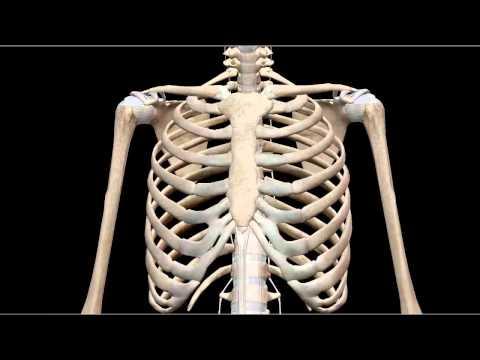GIẢI PHẨU CƠ THỂ: Cấu tạo hệ xương người 3d  (Human Anatomy Atlas)