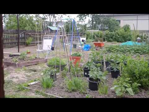 Chat allotment