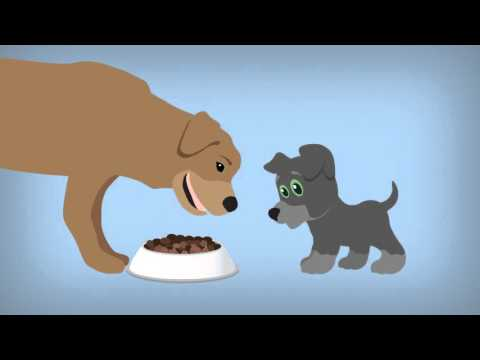 food-for-thought---what-a-puppy-eats