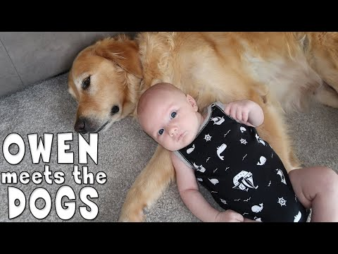 Baby Owen Reacts to Meeting Our Dogs