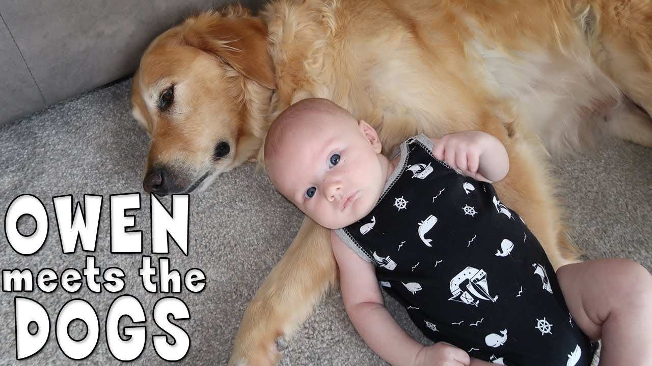Baby Owen Reacts To Meeting Our Dogs Family Fun Pack