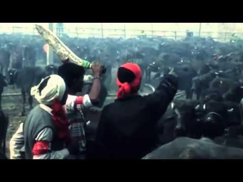 End the Sacrifice at the Gadhimai Festival