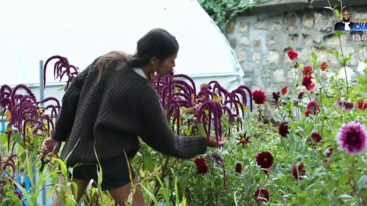 Jardin - Les fleurs sous le bitume