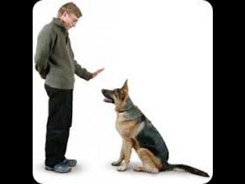 video comment bien dresser son chien