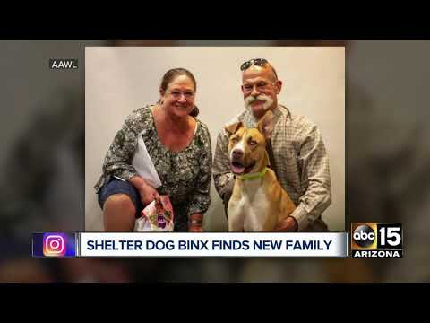 Dog returned to Phoenix shelter for being 'too good' now adopted