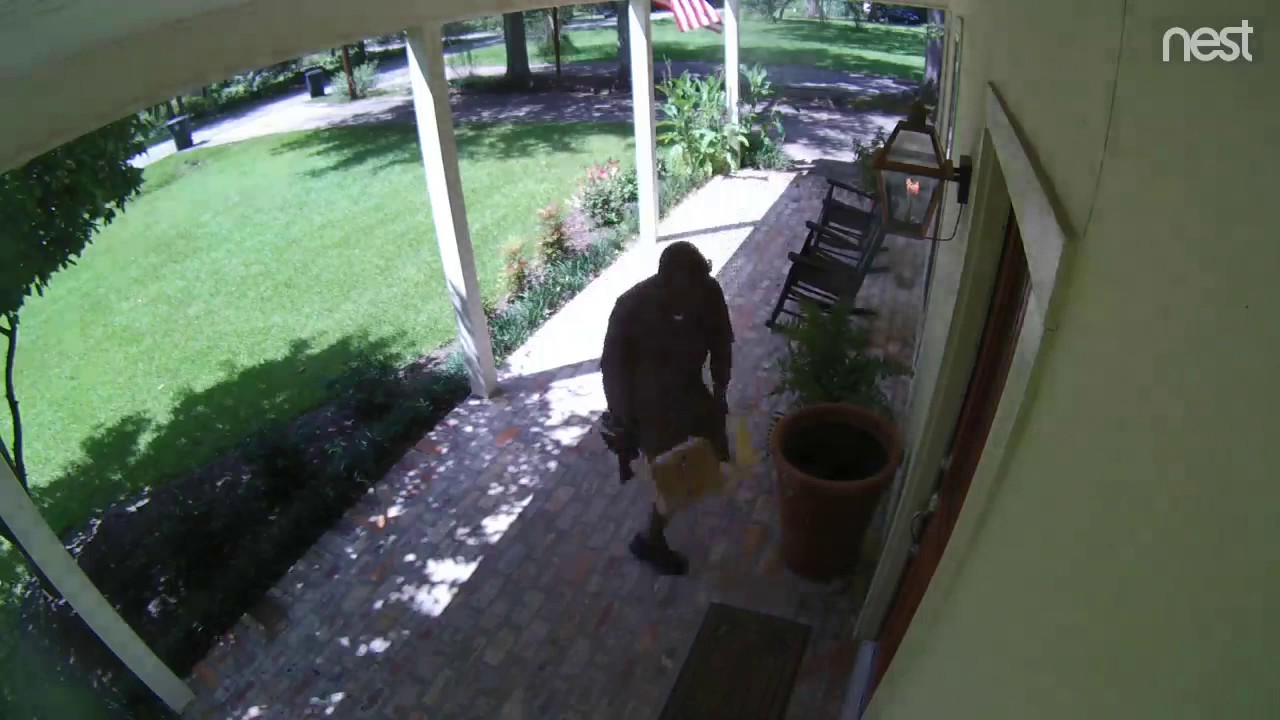 Funny Video: UPS Delivery Man Surprised By a Snake