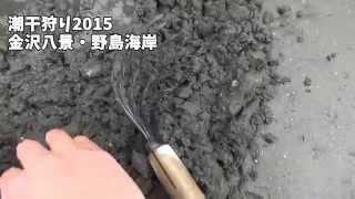 横浜 金沢八景 野島海岸 2015/3/21 大潮ちょいと潮干狩りしてきました!...