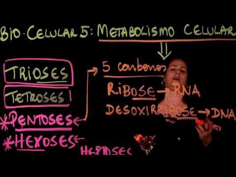 Aula 5 METABOLISMO CELULAR Parte 4 Carboidratos