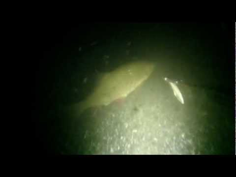 как ловить рыбу ночью с фонариком и острогой