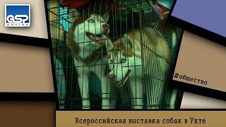 Всероссийская выставка собак в Ухте   11 апреля'15   16:00