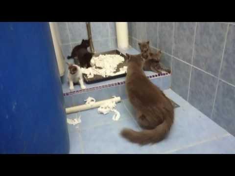 Cat kitten In The Bathroom