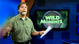 Wild Moments: Dealing with pesky woodpeckers