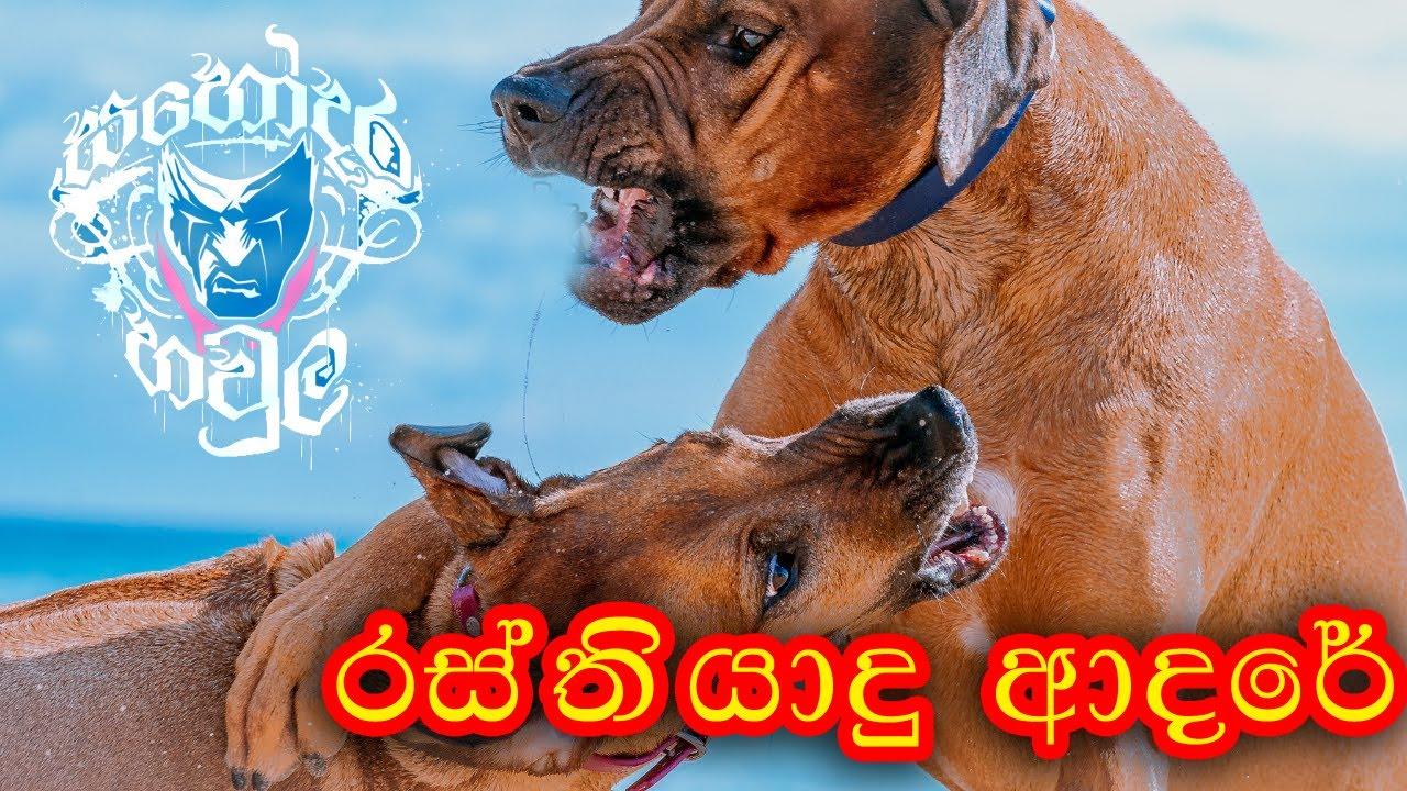 Download Rasthiyadu Adare - Tik Tok Animal Version