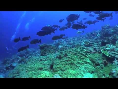 Diving Madang - Papua New Guinea