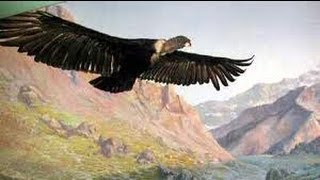 Download El Condor Pasa - Paul Simon &  Garfunkel Mp3 and Videos