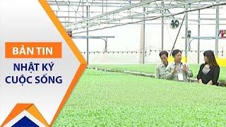 Trồng rau không cần đất: Sạch và ngon! | VTC