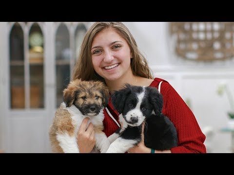 Which Puppy Should Brooklyn Get?