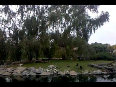 Video-2010-05-02-17-34-58.3gp