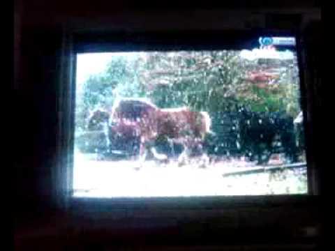 blessing tv.. saranam.. saranam...