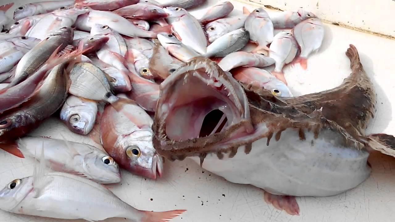 March au poisson au vieux port marseille 2015 youtube - Restaurant poisson marseille vieux port ...