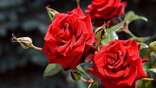 Чудесно и Красиво для души! Неземная Музыка Сергея Чекалина уносит вдаль к мечтам..Только Послушайте