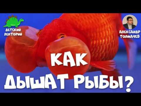 Как устроена рыба
