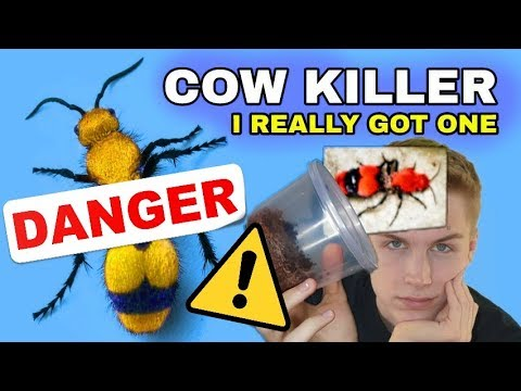 I GOT A PET COW KILLER! (Yes, I'm Crazy)