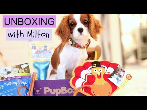 Unboxing Pupbox with Milton   Dog Monthly Subscription Box   Cavalier King Charles Spaniel