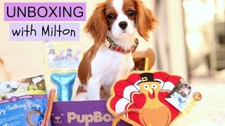 Unboxing Pupbox with Milton | Dog Monthly Subscription Box | Cavalier King Charles Spaniel thumbnail