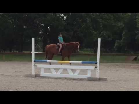 Versailles  walk with D2 Pony Clubber (beginner rider)
